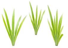 Green grass on white background Stock Photo