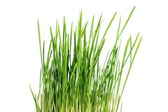 Green grass on white background. Isolated object Stock Images