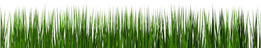 Green grass  on white background. Royalty Free Stock Images