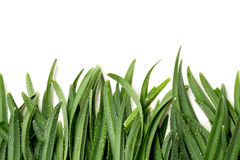 Green grass on a white background Stock Photography