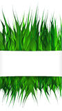 Green grass on white background whith copyspace. Stock Images