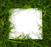 Green grass with white card Royalty Free Stock Image