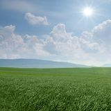 Green grass and white clouds backgrounds. Green grass on a blue sky and white clouds backgrounds Royalty Free Stock Images