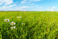 Green grass and white clouds Royalty Free Stock Photography