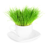 Green grass in white cup isolated Stock Photography
