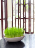 Green grass in a white flowerpot on summer, spring background Stock Images