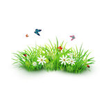 Green grass with white flowers, butterflies and ladybug. Vector element for design. Green grass with white flowers, butterflies and ladybug.  on white background Royalty Free Stock Photo