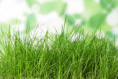 The green grass on white Stock Images