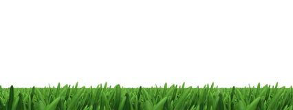 Green grass on white Stock Photo