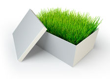 Green grass in white open box Stock Images