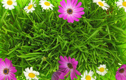 Green grass and white, pink flowers Stock Image