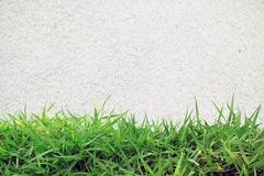 Green grass and white sand Stock Images