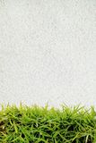 Green grass and white sand. For background Stock Photography