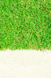 Green grass and white sand Stock Image