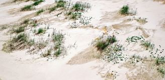 Green grass on white sand. Close view Royalty Free Stock Photography