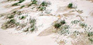 Green grass on white sand. Closeup view Stock Photo