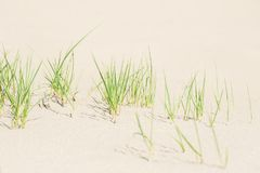 Green grass on the white sand. Shallow depth of ffield Stock Image