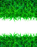 Green grass  and white space Stock Images
