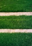 Green grass with white tile walkway background royalty free stock photography