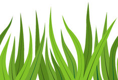 Green grass on white Royalty Free Stock Images