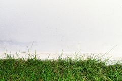 Green Grass and White Wall. Background Royalty Free Stock Image