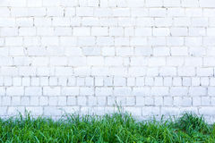 Green Grass and White Wall royalty free stock photo