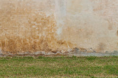 Green grass and white wall Royalty Free Stock Photography