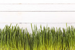 Green grass on a white wooden background. Space for text Royalty Free Stock Photos