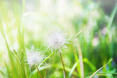 Green grass and wild plants in the forest. Stock Photos