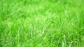 Green grass stock video