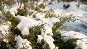 Green grass in the winter snow lies on the grass nature landscape. Green grass in winter snow lies on the grass nature landscape stock video