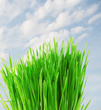 Green Grass With Water Drop Royalty Free Stock Photos