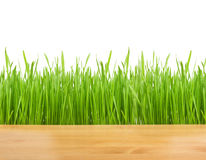 Green grass on wood Stock Photography