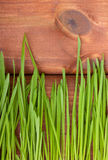 Green grass and on wood Stock Image