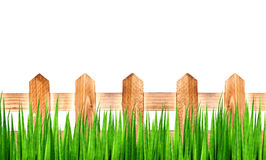 Green grass and wooden fence Royalty Free Stock Image