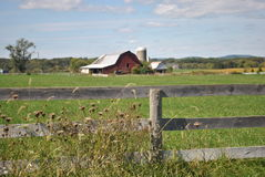 Green grass with wooden fence and barn Royalty Free Stock Images