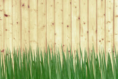 Green grass and wooden wall Stock Images