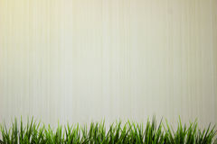 Green grass  on wooden white background. Green grass  on white background with copypaste space Royalty Free Stock Photography