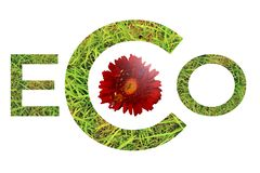 Green grass word eco  with red daisy isolated on white background royalty free stock photo
