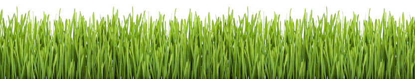 Green Grass (XXXL) Royalty Free Stock Photography