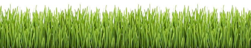 Green Grass (XXXL) Royalty Free Stock Photography
