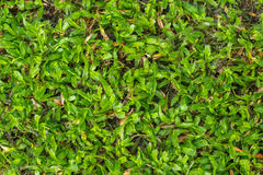 Green grass on the yard Royalty Free Stock Photos