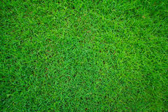 Green grass on the yard Stock Photography
