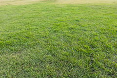 green grass yard, playground, Green lawn natural  pattern and ba Royalty Free Stock Photos