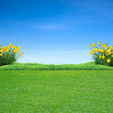 Green grass and yellow flowers. On blue sky royalty free stock photos