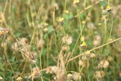 Green grass yellow flowers background. Stock Photo