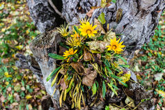 Green grass, yellow flowers and brown leaves Royalty Free Stock Photo