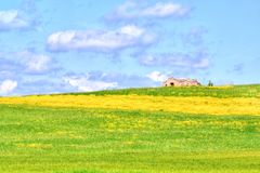 Green grass and yellow flowers field landscape under blue sky and clouds. With rural house in the background Stock Photos
