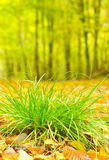 Green grass and yellow leaves Stock Photos