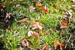 Green grass with yellow leaves. Green grass with the yellow leaves in the sunlight stock photography